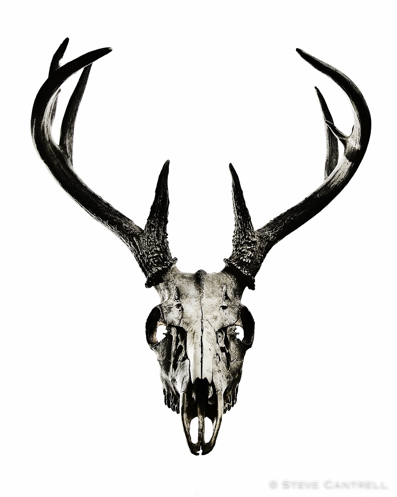 deer head drawing tumblr - photo #10