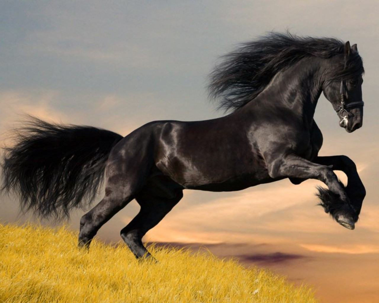 Amazing Wallpaper Horse Dark Brown - tumblr_static_9qxoiubodasc8cs80c8gw4c4k  Pictures_429177.jpg