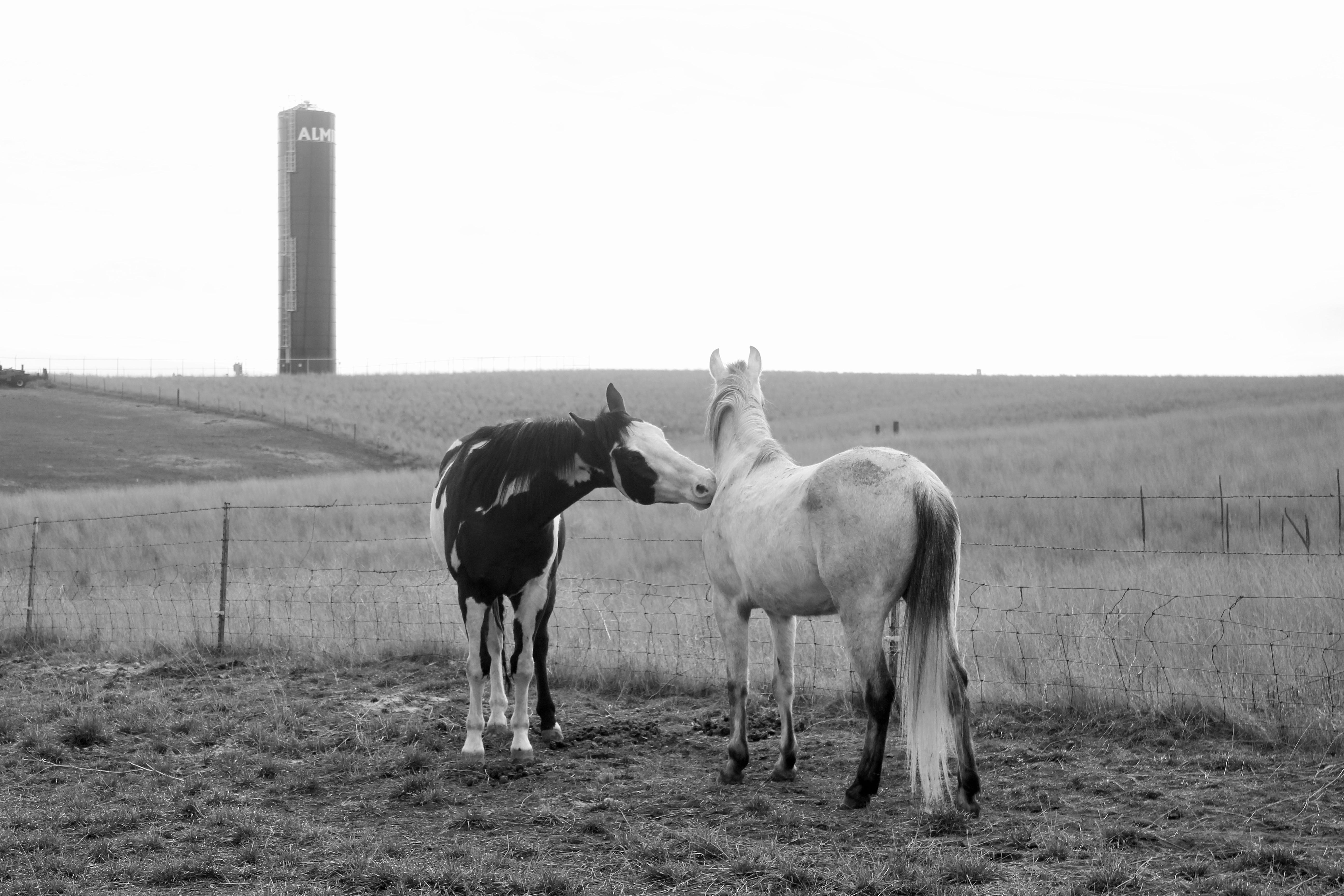 Paint horse dreamin