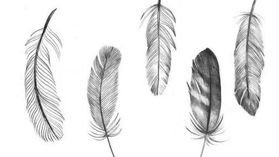 Výsledok vyhľadávania obrázkov pre dopyt feather tumblr