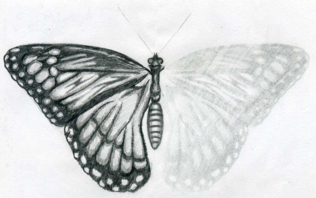 This is a photo of Amazing Butterfly Drawing Tumblr