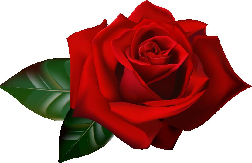 Купить цветы в Красноярске Доставка цветов и букетов