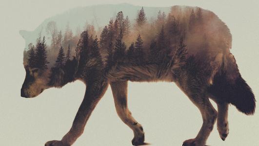 Znalezione obrazy dla zapytania tumblr wolf