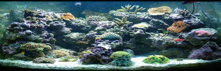 Saltwater fish tank guide saltwater aquarium guide fish for Distilled water for fish tank