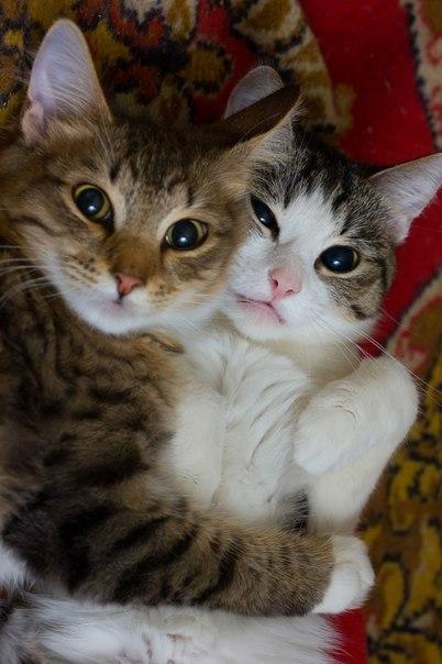тумблер коты картинки