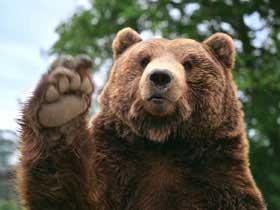 EFF YEAH BEARS