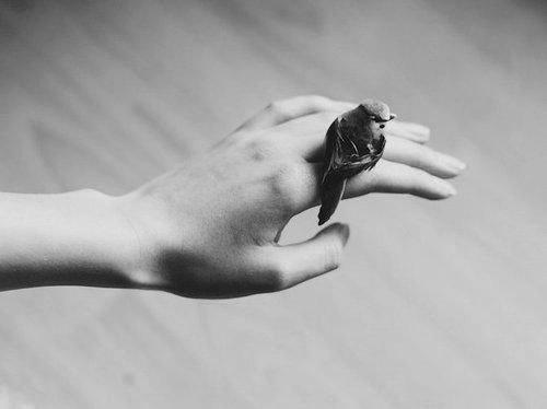سعادتك تعنيّ عصافير قلبي تحلّق tumblr_static_______