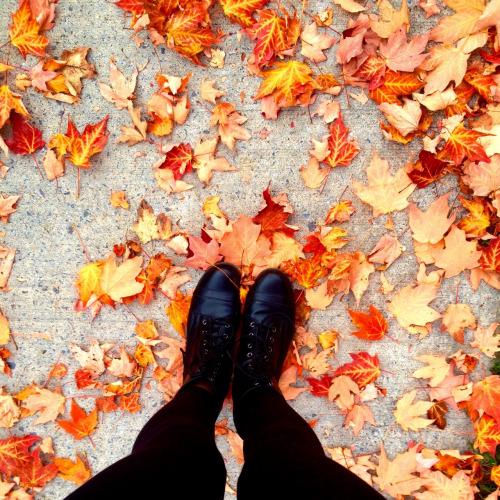 Výsledek obrázku pro fall leaves tumblr