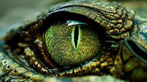 Kuvahaun tulos haulle tumblr crocodile