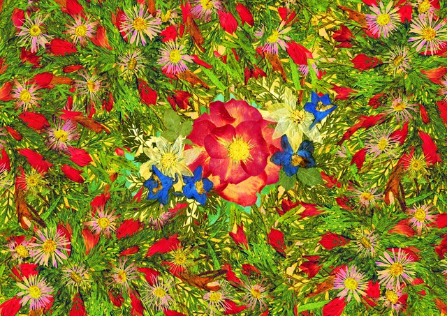 pressed flowers art and prints