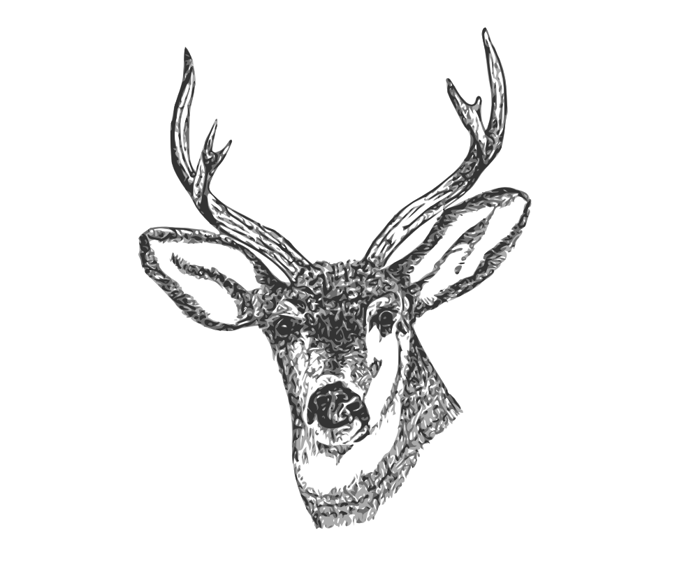 deer head drawing tumblr - photo #27