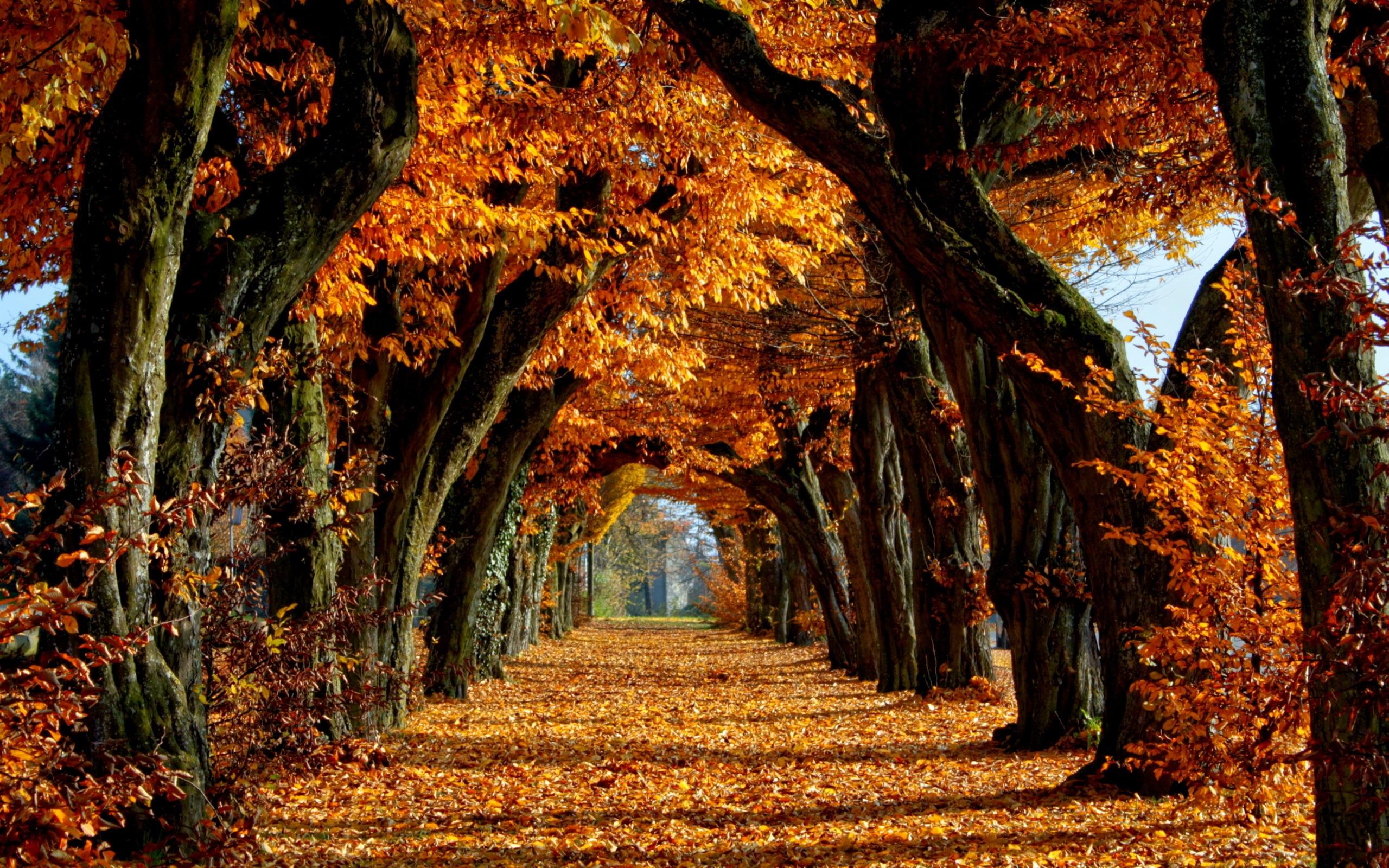 Afbeeldingsresultaat voor autumn