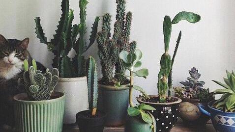 plants are friend tumblr