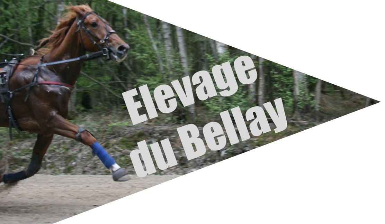 L'élevage DU BELLAY