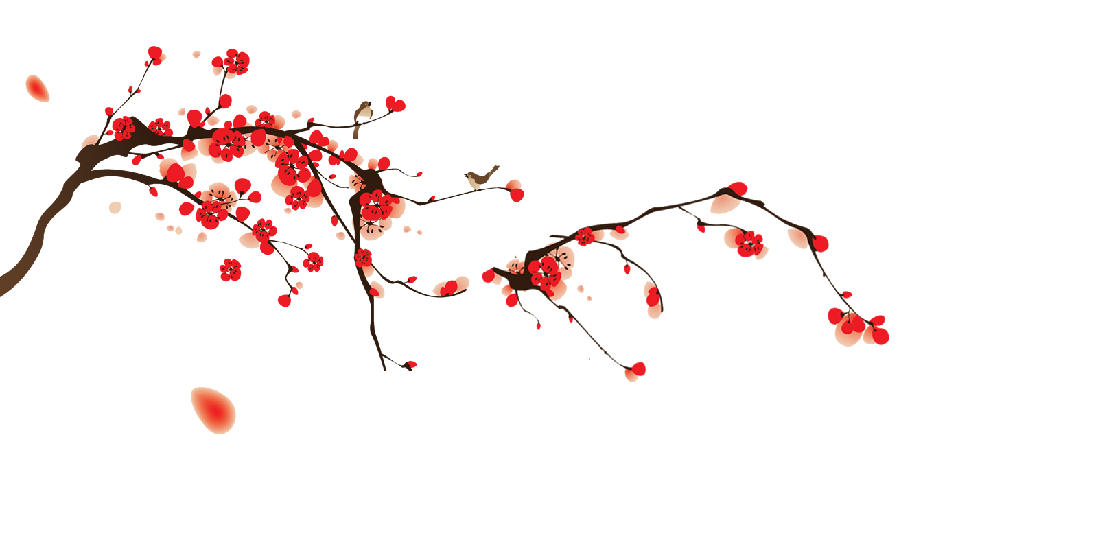 Sxkura.tumblr on Tumblr Transparent Flowers Rose