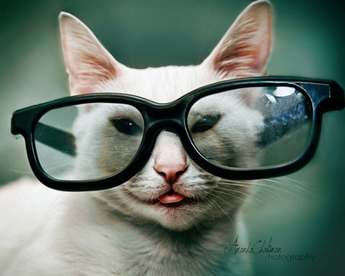 Очки для кошки