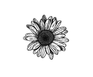 The gallery for --> Flower Tumblr Transparent Black And White Transparent Black And White Flowers Tumblr