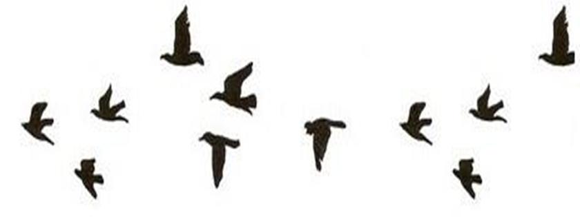 meu canto mais bonito que o canto dos pássaros são os seus