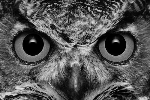 Owl Tumblr Owl Tumblr
