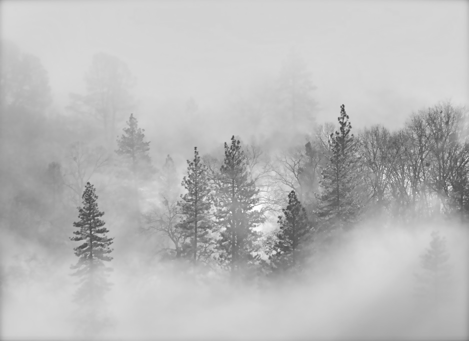 Fog Tumblr Images & Pictures - Becuo