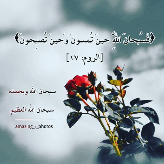 alhamdulillah altavistaventures Choice Image