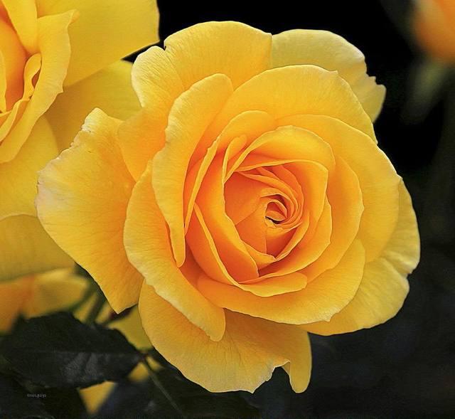 Gelbe Bilder gelbe