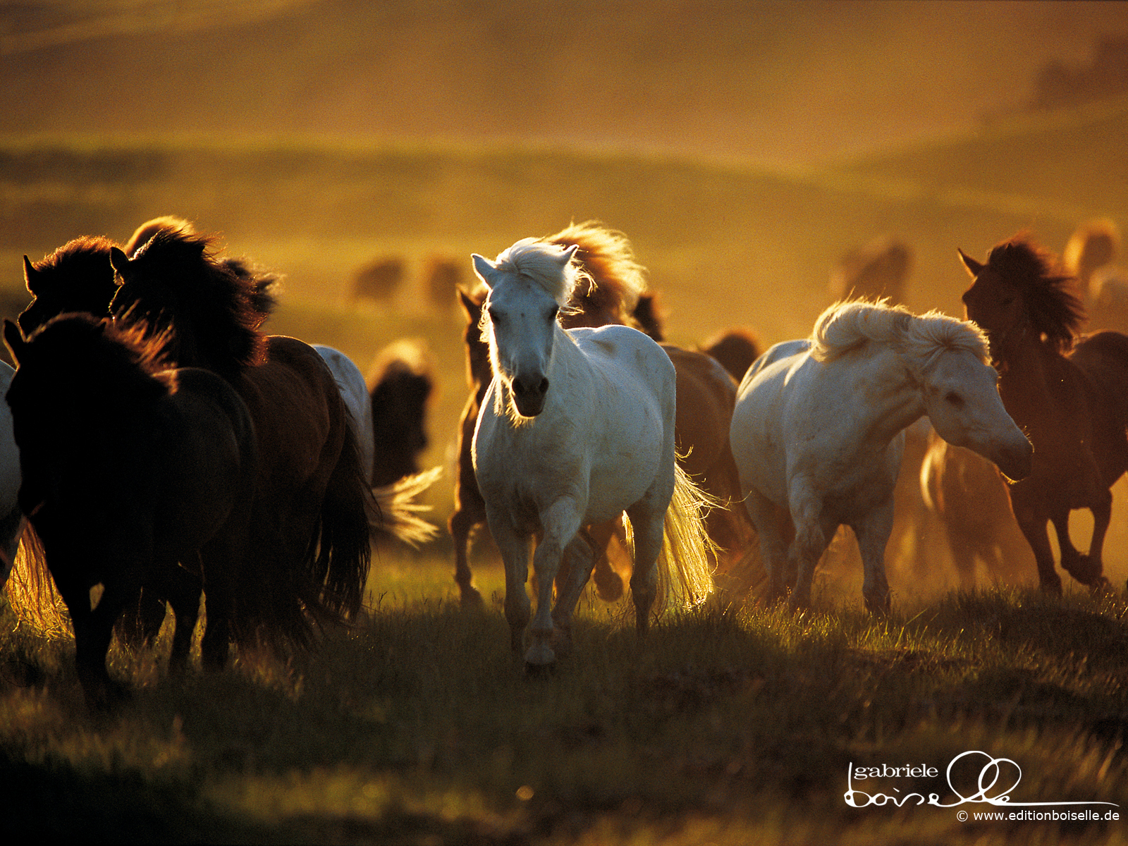 Beautiful Wallpaper Horse Mustang - tumblr_static_horses  Collection_851283.jpg