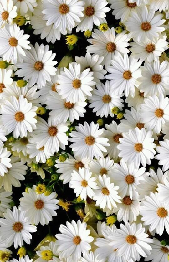 Estrella Flores Tumblr