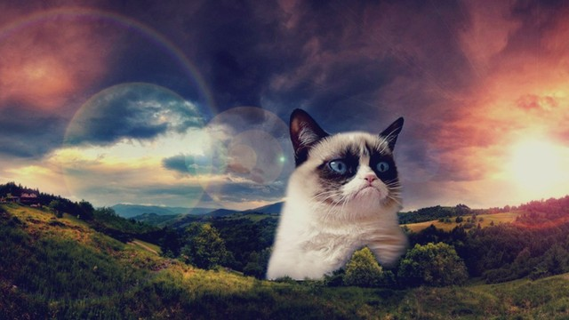 The Grumpy Cat Gallery