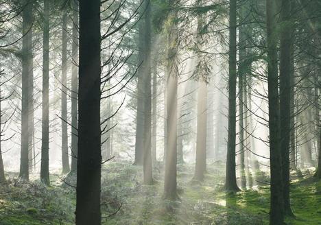 Misty Forest Acrylic Painting - milk  - ☆ Milk ☆ 平平。淡淡。也是真。