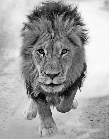As Bold As A Lion