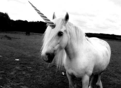 Leather Unicorn