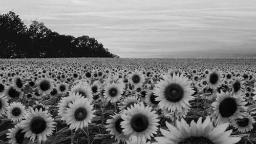 Flowers blowing in wind tumblr free mightylinksfo