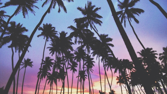 palm trees tumblr vintage