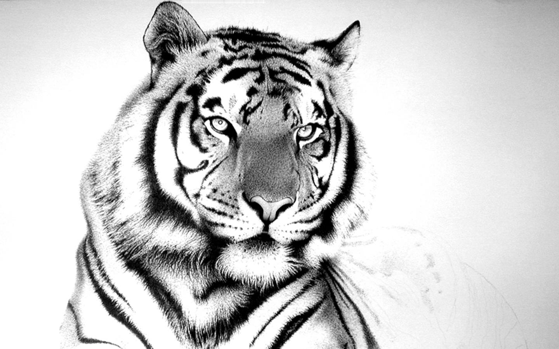 White tiger background tumblr - photo#28