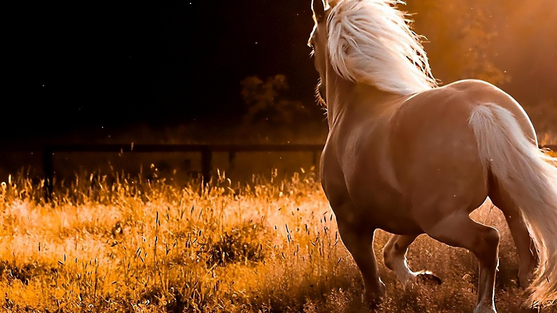 Amazing Wallpaper Horse Dark Brown - tumblr_static_horse_run-animal_photography_wallpaper_1920x1080  Pictures_429177.jpg