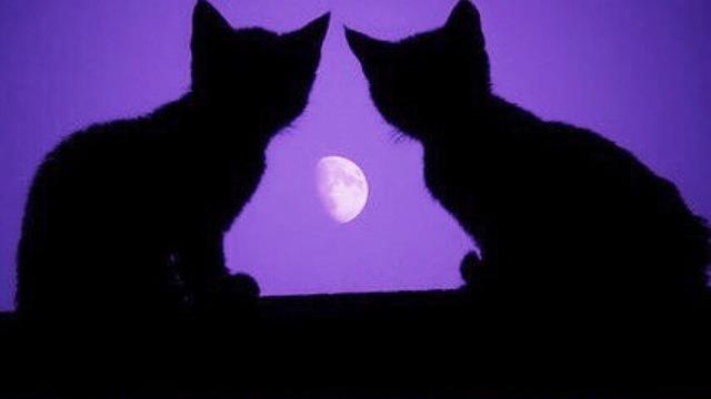 Лунный календарь  Фиалки без границ