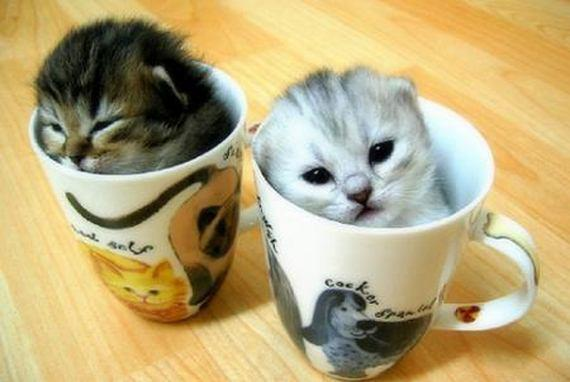 Mom and baby cats tumblr the nico and mom baby cat hour thecheapjerseys Images