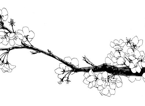View topic - ᵂᴬˢᵀᴱᴸᴬᴺᴰ ᶠᵃᶰᶠᶦᶜᵗᶦᵒᶰ ᵃᶰᵈ ᵐᶦˢᶜ - Chicken Smoothie Transparent Black And White Flowers Tumblr