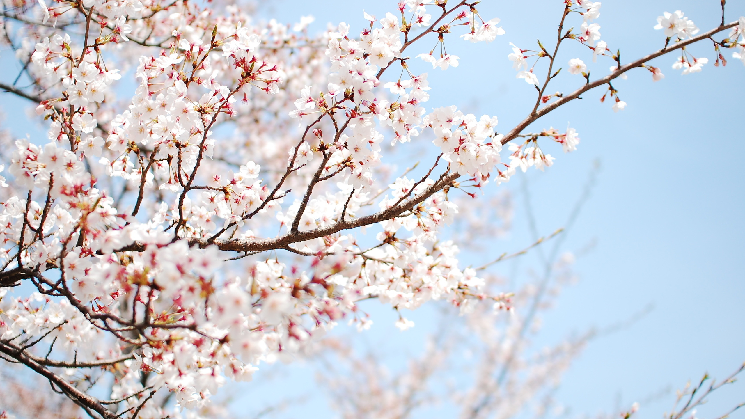Great Wallpaper Home Screen Spring - tumblr_static_4pxr0wfy4h44c8c4cww4k00kg  Graphic_682472.jpg