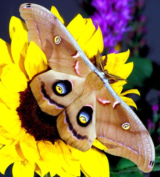 Cute moth tumblr - photo#23