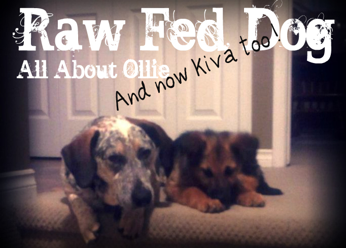 Raw Fed Dog