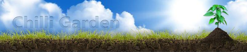 - Chilli Garden -