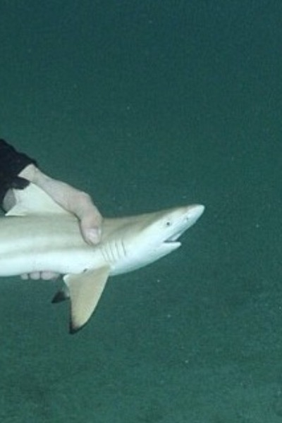O Shark Tumblr What a day