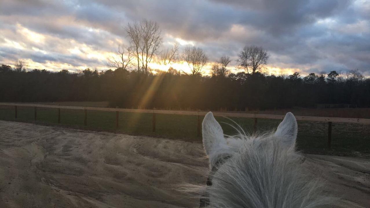 Equestrian Aesthetic On Tumblr
