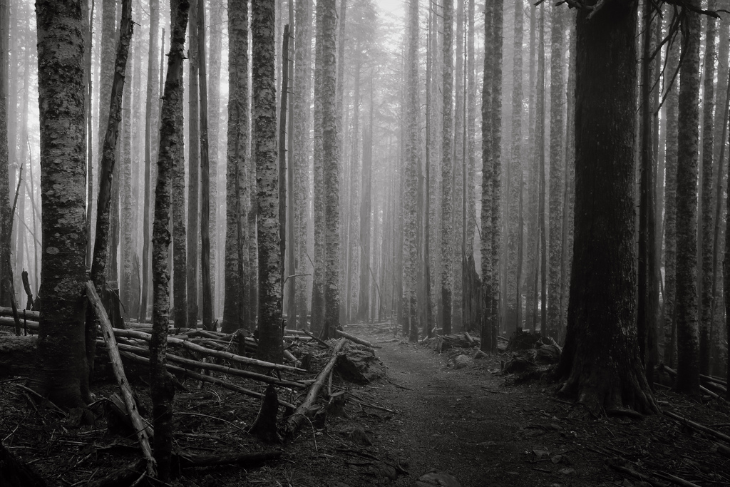 Dark Images Tumblr Dark Paradise