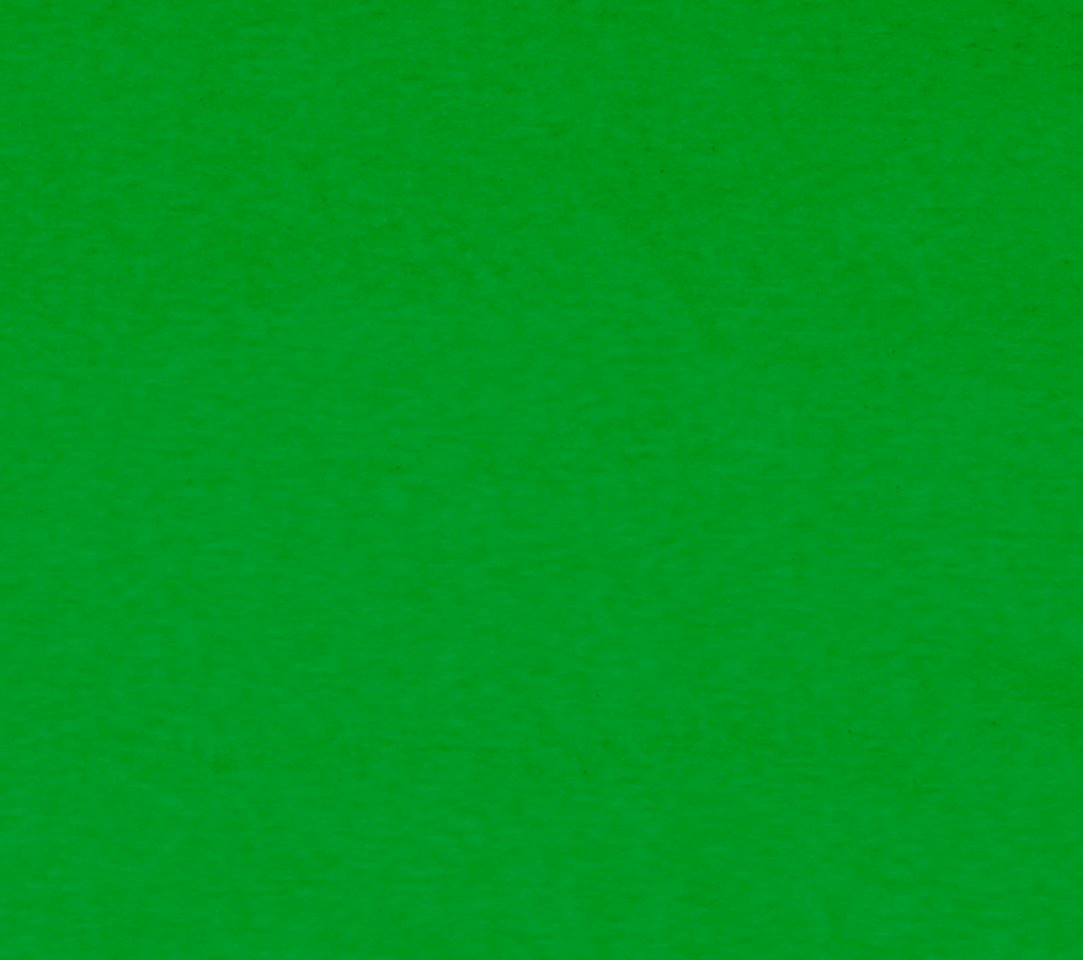 A n i m a l - Plain green background ...