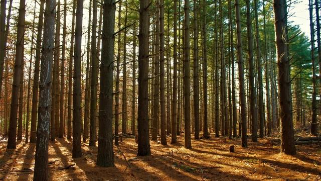 Ts jacqueline woods