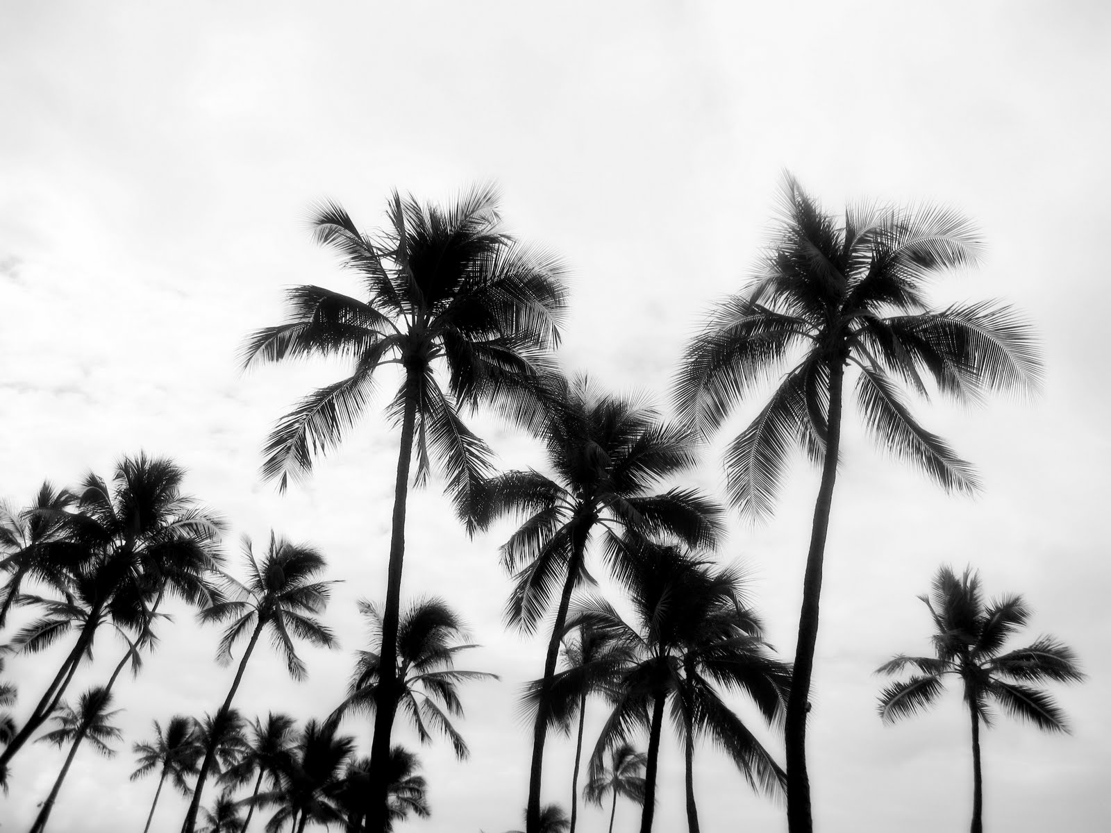 palm trees tumblr black and white23 and