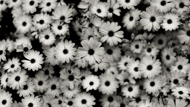 Beautiful white flowers tumblr mybeautifulflower mightylinksfo